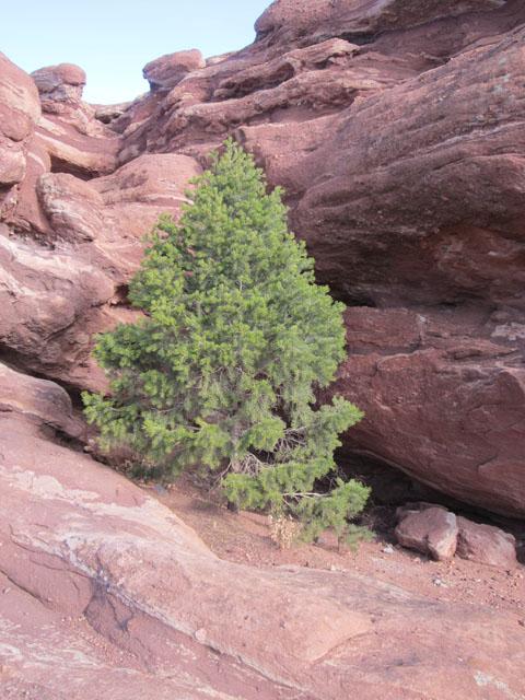 01-02-14_TreeGrowInRock_8794