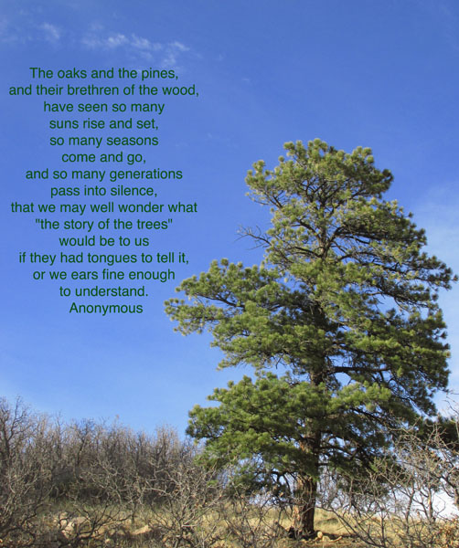 Poem for a Tree in Cheyenne Canyon State Park