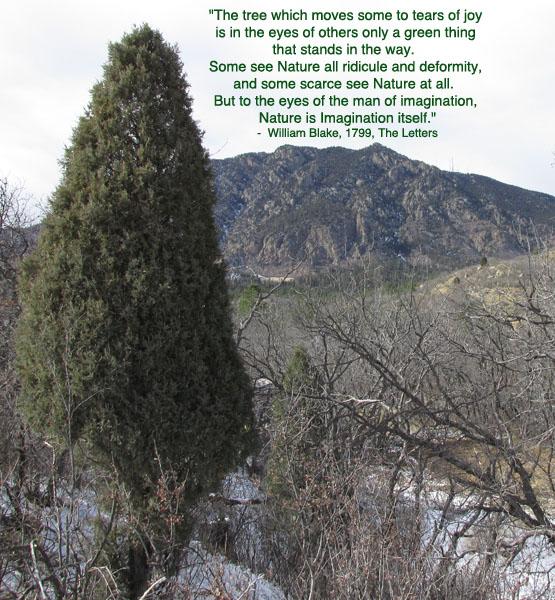 Wm Blake Tree Poem and Cheyenne Mountain