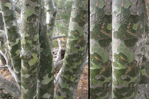 Tree Trunk Puzzle Inspiration at Denver Botanical Gardens