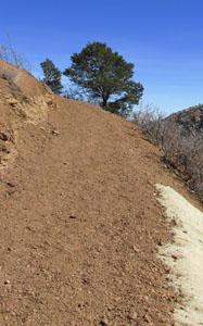 New Ute Pass Trail