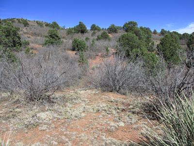 Trail not Take at Cedar Summit