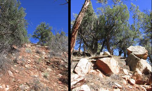 Ancient Cedar on Summit of Garden of the Gods Hike