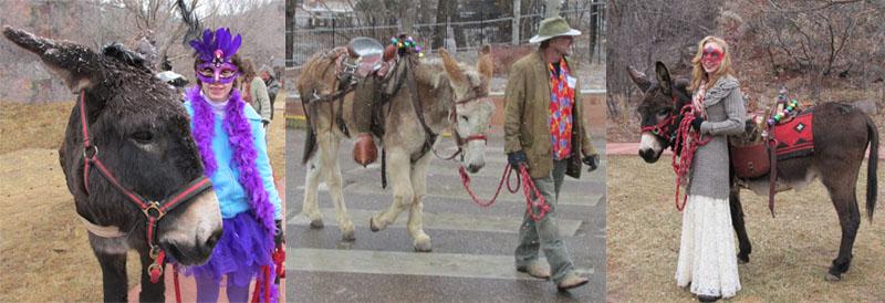 Burros in Manitou Springs Carnivale