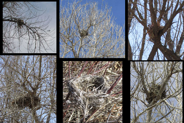 Nests at Fountain Creek Nature Center
