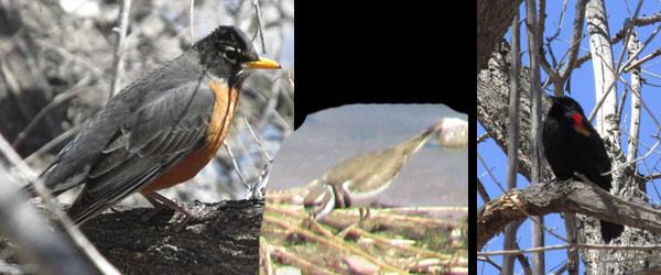 Birds  at Fountain Creek Nature Center
