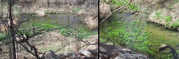 Spriing Greening  at Fountain Creek Nature Center