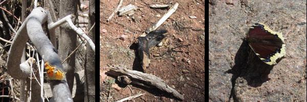 Butterflies & Evidence of the Waldo Canyon  Burn