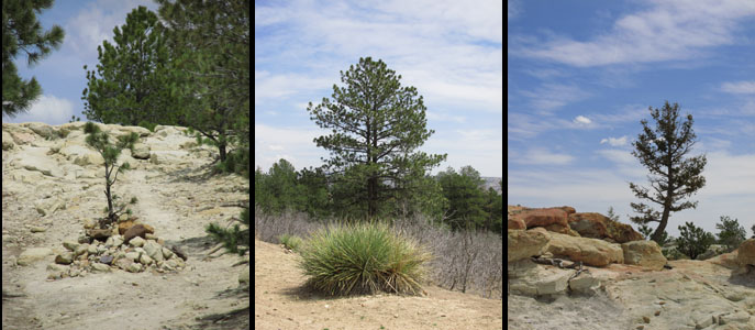 Individual Trees at Ute Valley Park
