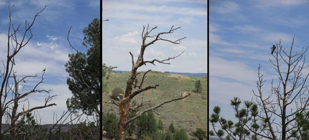 Birds at Ute Valley Park