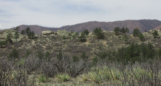 View of Waldo Canyon Fire Burn from Ute Valley Park