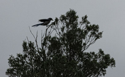 Bird Landing on tree in Garden of the Gods