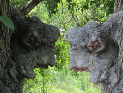 Dark & Light side of tree faces in Fountain Valley Park