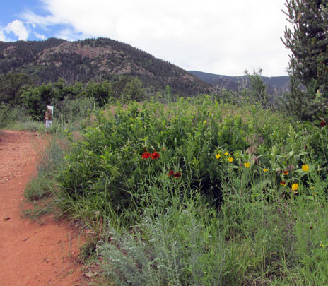 Bevers Trail Begins With Flowers