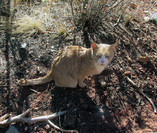 Manitou Springs Hiking Cat